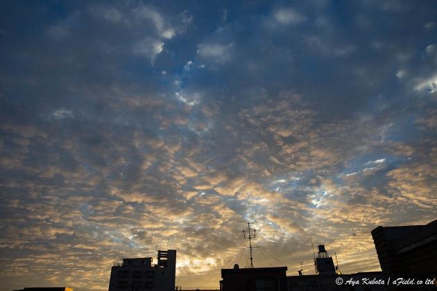 うろこ雲。こんな空を見ると秋だな〜と思う