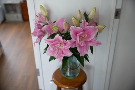 持ち帰ってきたときはすべてつぼみでしたが、毎日2〜3個ずつ花が咲いています。