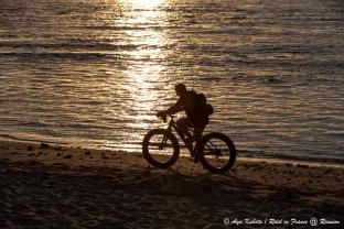 浜辺を走るファットバイク。